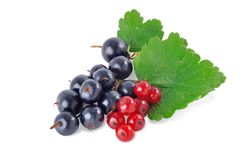 Black and red currant2 Royalty Free Stock Images
