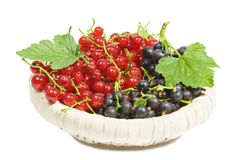 Black and red currants Stock Photos