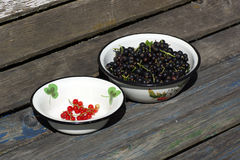 Black and red currants. Stock Image