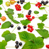 Black and red currants, gooseberries isolated on white background. stock photography