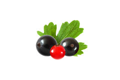 Black  and red currants with leaf isolated on white background. With clipping path Stock Images