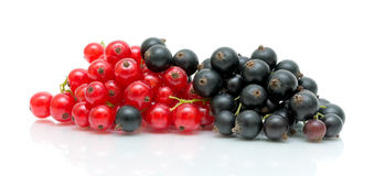 Black and red currants on a white background Royalty Free Stock Image