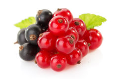 Black and red currants on white Stock Photo