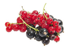Black and red currants Stock Images