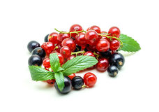 Black and Red Currants on white background stock photo
