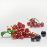 Black and Red Currants on white background. Black and Red Currants isolated on white background royalty free stock image