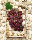 Black or red grapes withcorks Stock Photos