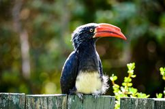 Black and Red Long Beak Bird on Fence Near Trees Stock Image