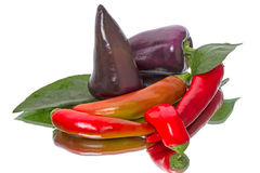 Black and red pepper Stock Photos