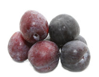 Black and red plum Royalty Free Stock Images