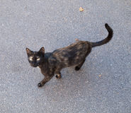 Black and red stray cat walking on asphalt Stock Photos