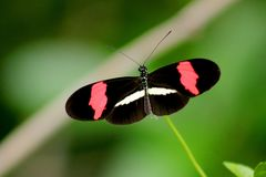 Black, Red, and White Butterfly in Closeup Photo Stock Image