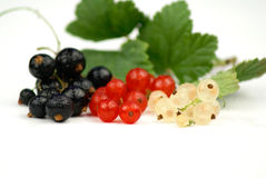 Black, Red and White Currant. Wet black, red and white currant isolated on white background Stock Image