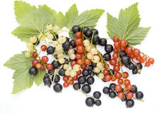 Black, red and white currant Royalty Free Stock Images