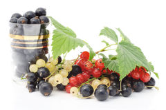 Black, red and white currant Royalty Free Stock Photos