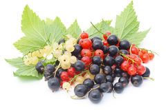Black, red and white currant Stock Photography