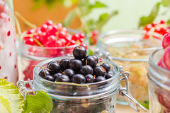 Black red white currants gooseberries cherries jars preparations Royalty Free Stock Photography