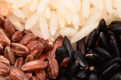 Black Red And White Rice Stock Image