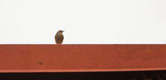 Black Redstart on red metal Royalty Free Stock Photography