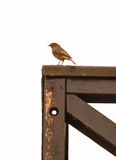 Black Redstart on wooden veranda Stock Photo