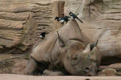 Free Black Rhinoceros Stock Photos - 701103