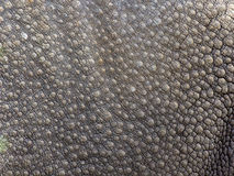 Black Rhinoceros Skin Texture Stock Photo