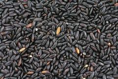 Black rice Royalty Free Stock Photography