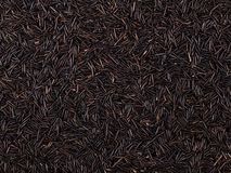 Black Rice Royalty Free Stock Photos