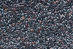 Black rice Stock Images