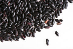 Black Rice. Sometimes called forbidden rice, turns an indigo color when cooked Royalty Free Stock Images