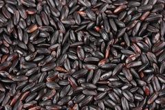 Black rice Stock Photography
