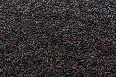 Black Rice (for use as background image or as texture) Stock Photos