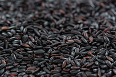 Black Rice (for use as background image or as texture) Royalty Free Stock Photography