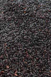 Black Rice (for use as background image or as texture) Stock Photo