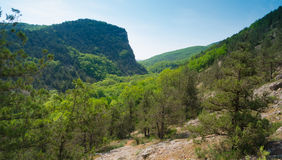 Black River Canyon landscape i Stock Image