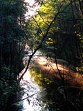 Black river in a dark forest Royalty Free Stock Photos
