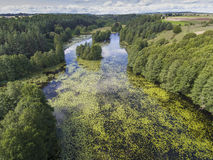 Black River Hancza in Turtul. Suwalszczyzna, Poland. Summer time Royalty Free Stock Images