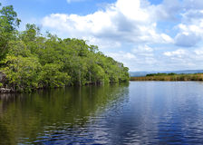 Black river Jamaica. Royalty Free Stock Photography