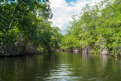 Black river, Jamaica. Capture from a boat Stock Photography