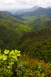 Black river mountain  in mauritius Stock Photography