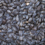 Black roasted sunflower seeds Stock Photos