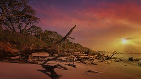 Black Rock Beach. With its fallen trees on Big Talbot State Park Royalty Free Stock Photo
