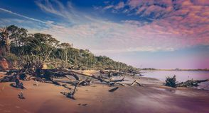 Black Rock Beach. With its fallen trees on Big Talbot State Park Royalty Free Stock Photography