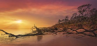 Black Rock Beach. With its fallen trees on Big Talbot State Park Stock Image