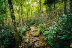 The Black Rock Nature Trail, at Grandfather Mountain, North Carolina. stock photos