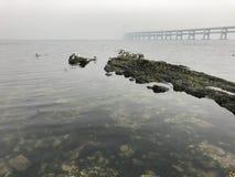 Black Rock Reef of Dalian Sea-Crossing Bridge royalty free stock photo