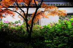 Black roof and white wall with colorful tree. Black roof and white wall in a garden of Hangzhou, China. In front of the wall, a colorful tree and beautiful Stock Photos