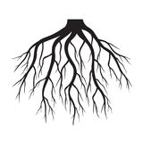 Black Roots. Vector Illustration. Stock Photo