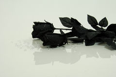 Black Rose. Symbolizing endings and death Stock Photos