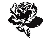 Black Rose Stock Photography